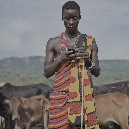 An African farmer checks his mobile device while cows stand in the background